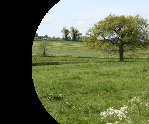 TDC Countryside Walk