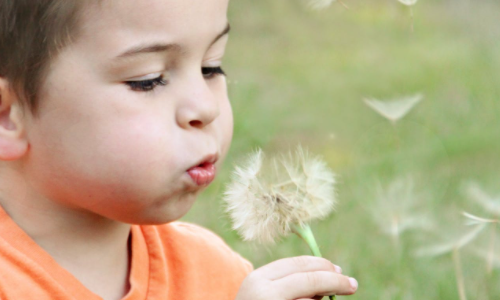 Boy blowing dandelions outside