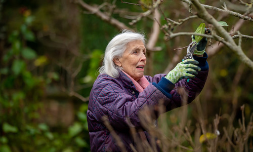 Active Ageing: Gardening