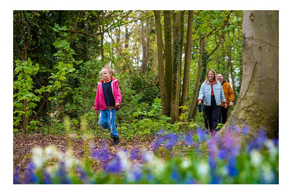 family walking in bluebell woods